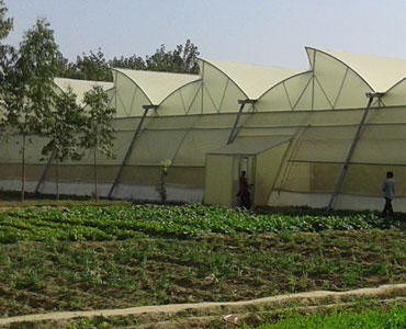 Agro Green House Projects