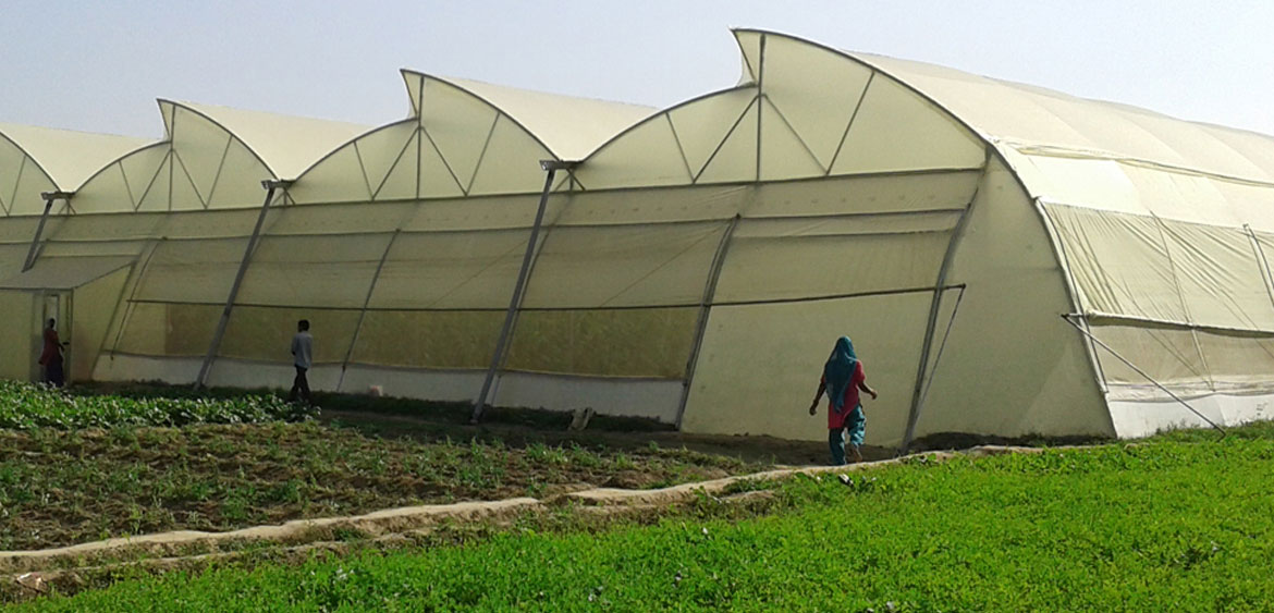 Greenhouse Project in india